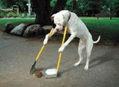 Clean up after your Dog - Pet etiquette